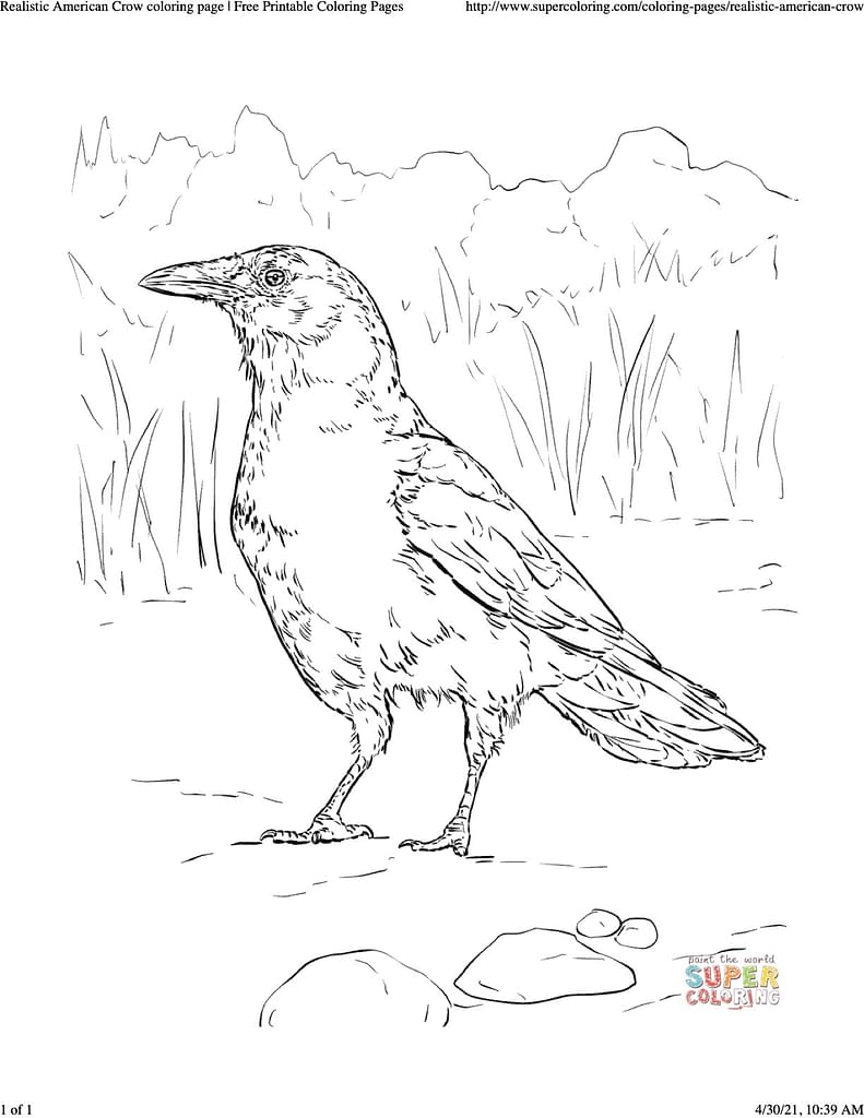 coloring sheet of realistic American crow