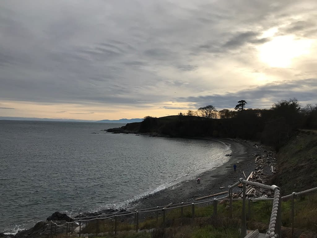 ocean cove at sunset, with trees silhouetted against the cloudy sky