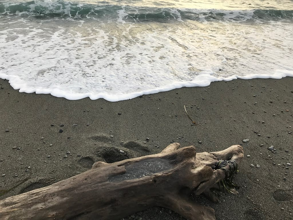 wave lapping the shore near a large smooth driftwood log