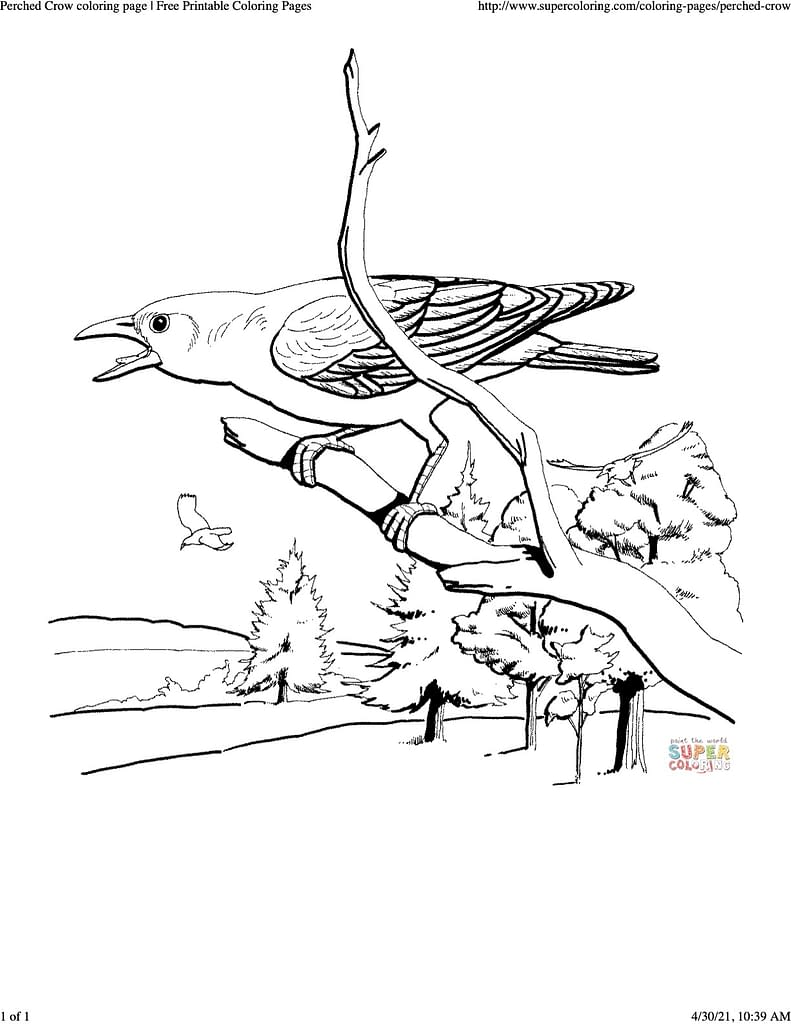 coloring sheet of a crow perched in a tree branch cawing at something. it looks pretty angry!