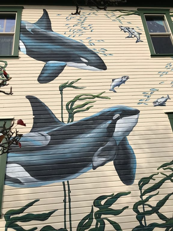 "outside of the Whale Museum, painted with orca whales, kelp ""trees"", and schools of fish"