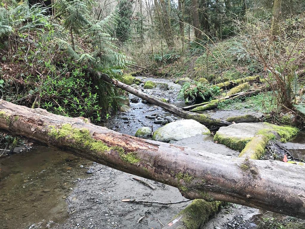 fallen logs across a creek line with ferns and mossy rocks