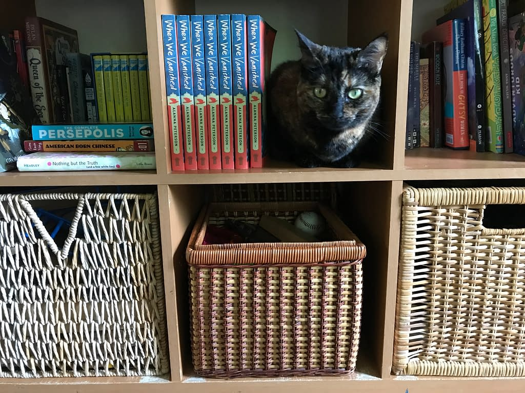 Bookshelf with When We Vanished books and a tortoiseshell cat serving as the bookend
