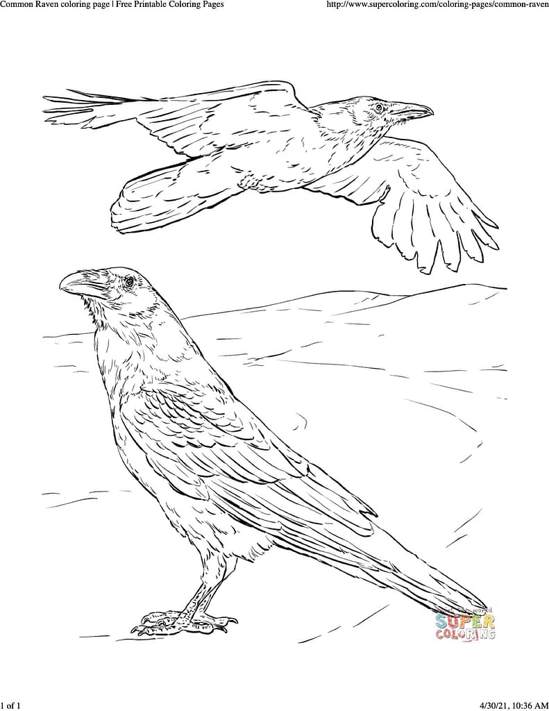 coloring sheet of two common ravens, one standing on the ground and the other flying above.
