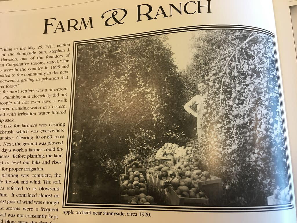"""Page from a history book about Sunnyside. Headline: Farm & Ranch. Black and white photograph showing a farmer behind an apple tree laden with fruit and boxes of apples. Caption says, """"Apple orchard near Sunnyside, circa 1920."""""""
