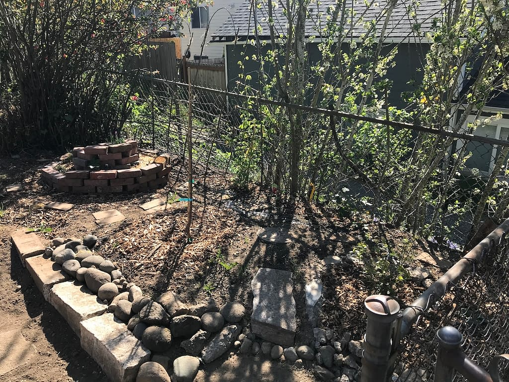 newly planted garden patch against a chain-link fence