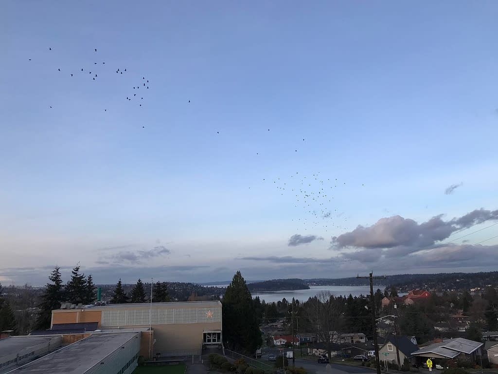 crows fly across an expanse of blue sky. Below, buildings and trees in the foreground give way to a scenic lake in the background.