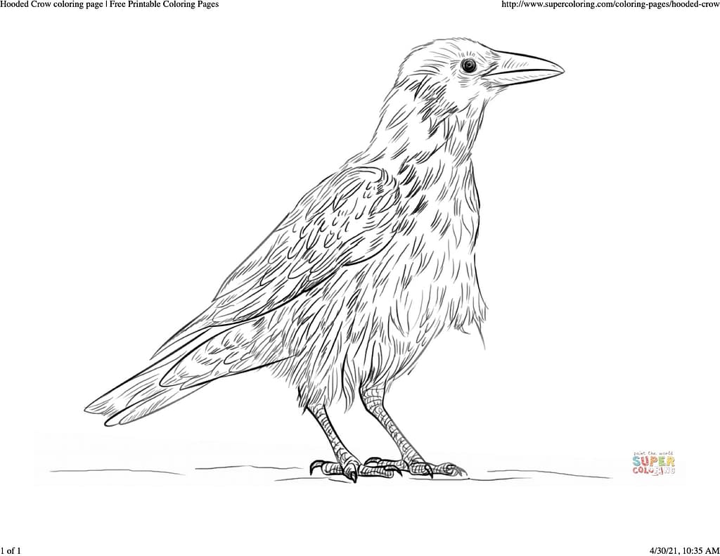 coloring sheet of a hooded crow