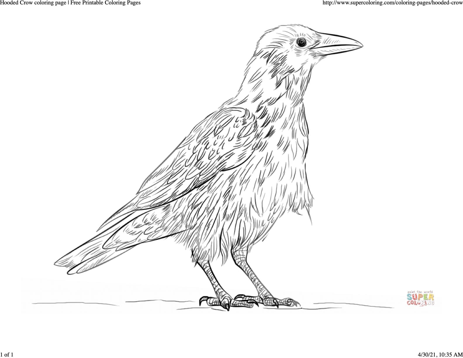 Crow Art Ideas